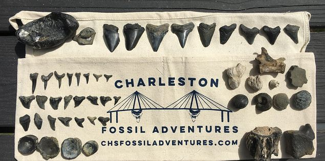 south carolina fossils