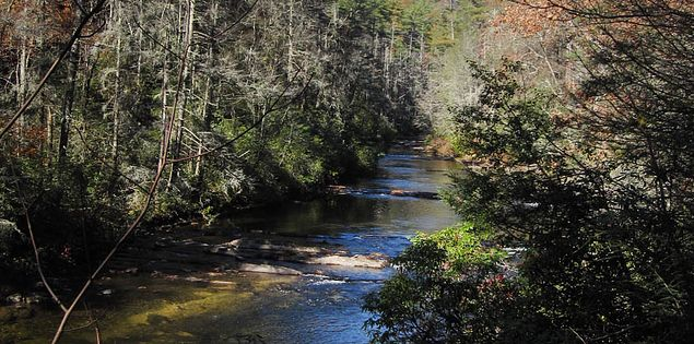 Fall colors on the Chattooga River Trail