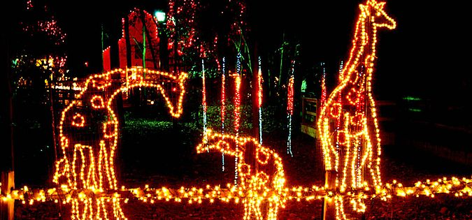Riverbanks zoo holiday lights