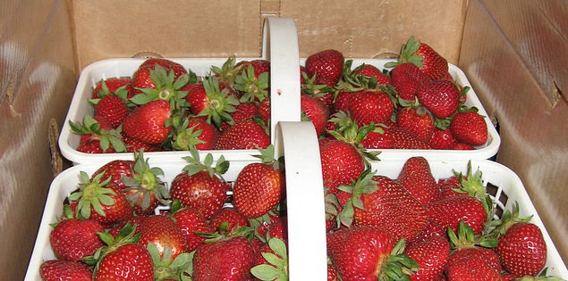 Beautiful strawberries from McLeod Farms in McBee, South Carolina.