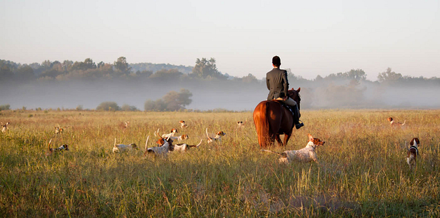 Huntsman rides through the South Carolina countryside with his hounds