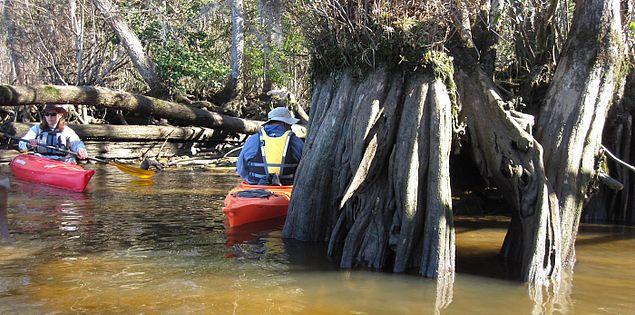 Nature on the Waccamaw River in South Carolina's Murrells Inlet
