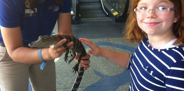 Baby alligator at the South Carolina Aquarium in Charleston