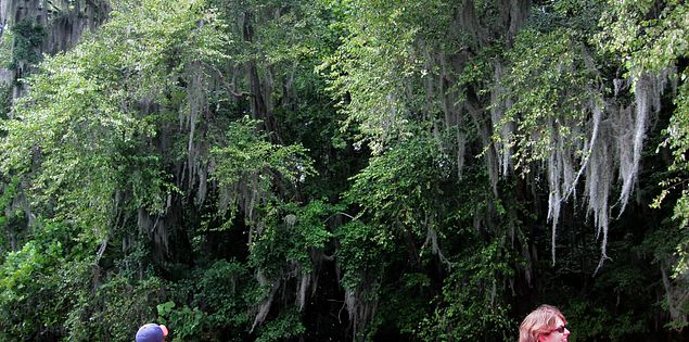 Spanish moss hanging by Columbia's Saluda River in South Carolina