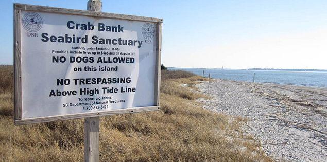 Crab Bank Seabird Sanctuary at Shem Creek in South Carolina