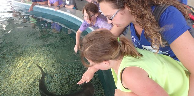 Experience the thrill of touching a shark at the SC Aquarium.