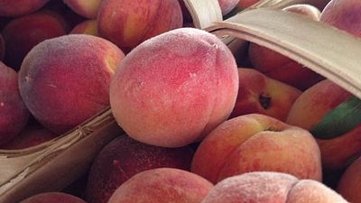 peaches in greer south carolina
