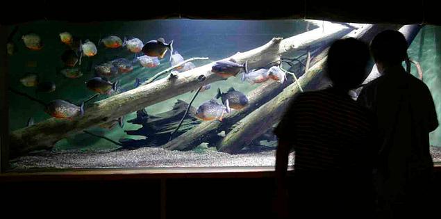 Fish at the South Carolina Aquarium