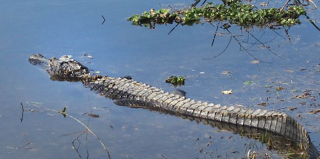 Wildlife viewed from the Tupelo Trail in Lowcountry South Carolina