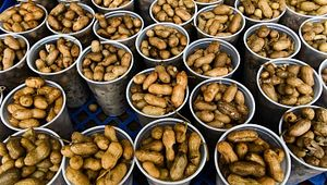 South Carolina Pelion Peanut Party