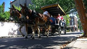 Palmetto Carriage Tours