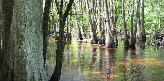 Cypress and tupelo trees along South Carolina's Edisto River