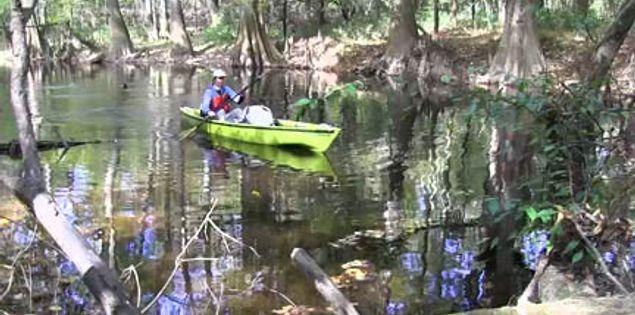 Kayaking through Cedar Creek in South Carolina's Congaree National Park