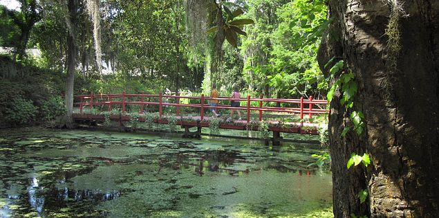 Plants in Charleston's Magnolia Plantation historic garden