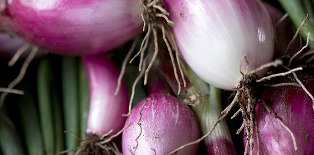 Thornhill Farms red onions used by Chef Sean Brock