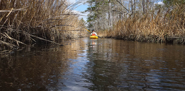 Kayakers paddle through historic South Carolina rice fields