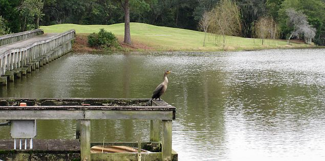 Willbrook Plantation is home to birds and other wildlife.