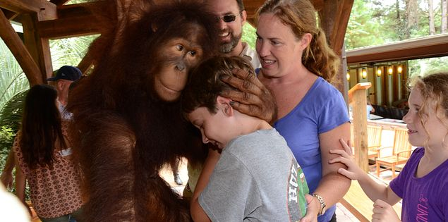 Hug an orangutan and the Myrtle Beach Safari.