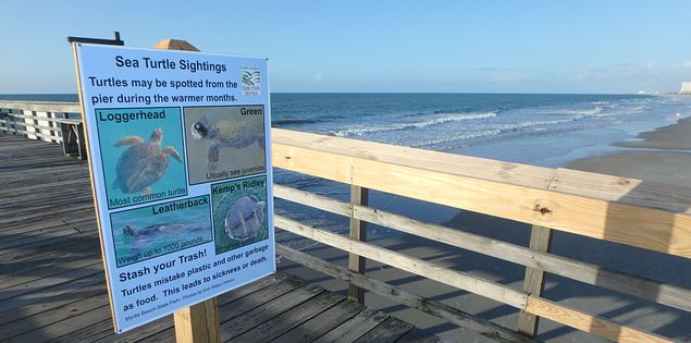 Find out fascinating facts about the wildlife around you at Myrtle Beach State Park!