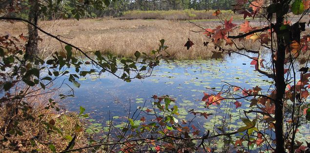 View of Kingfisher Pond from the Tupelo Trail