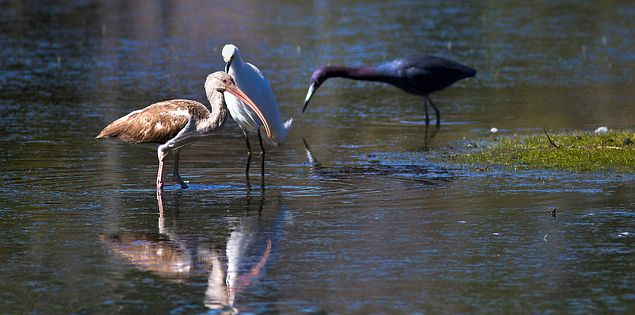 Birdwatching at South Carolina's Ernest F. Hollings Ace Basin National Wildlife Refuge