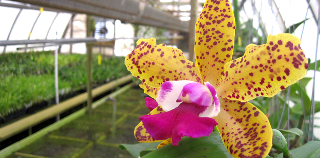 Carter & Holmes Orchids in Newberry, South Carolina
