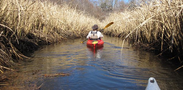 Black River Outdoors Center guide kayaking through South Carolina rice canals