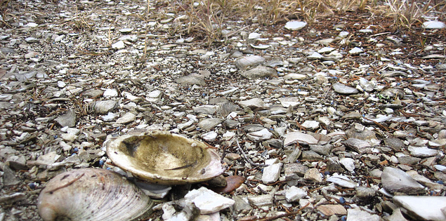 Clam shells and history in Awendaw, South Carolina