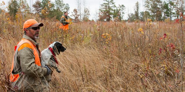 Hunting with dogs in Waterloo, South Carolina