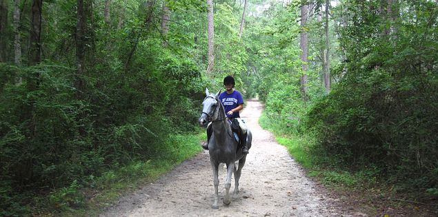Explore Hitchcock Woods on a horseback ride or hike.