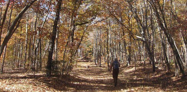 Venture through Kings Mountain State Park on Browns Mountain Trail.