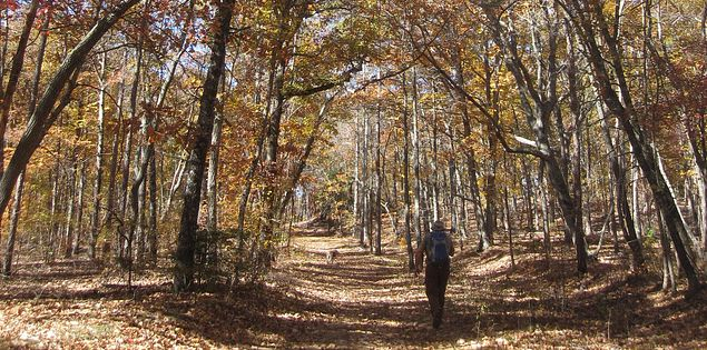 Venture through Kings Mountain State Park on Browns Mountain Trail.
