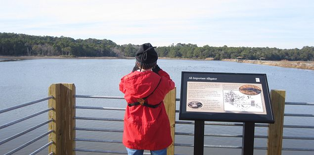 Huntington Beach State Park Bird watching