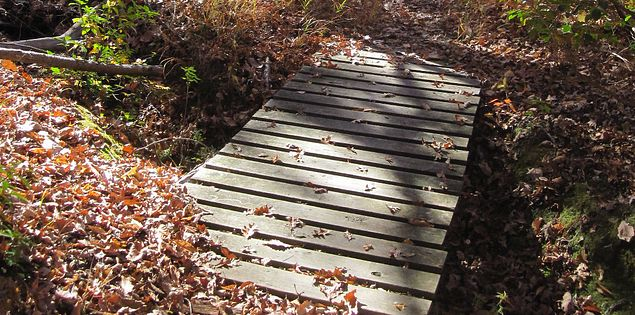 You'll find footbridges throughout the trails at Kings Mountain State Park.