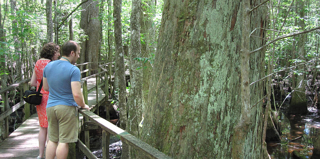 Boardwalk in South Carolina's Francis Beidler Forest