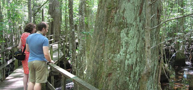 The boardwalk at Francis Beidler Forest