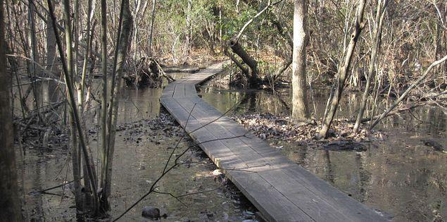 Myrtle Beach State Park Sculptured Oak Nature Trail