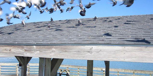 Myrtle Beach State Park pavilion in South Carolina
