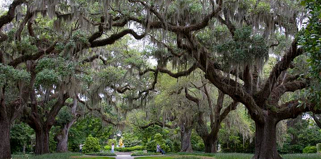 South Carolina's Brookgreen Gardens