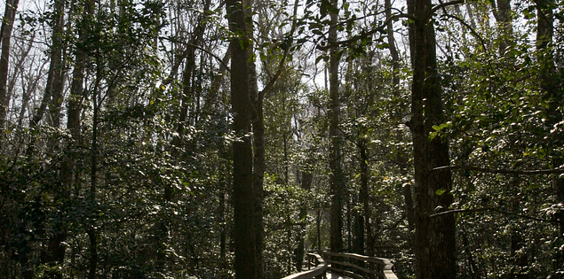 South Carolina's Congaree National Park