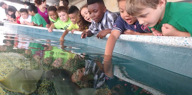 Check out the Shark Shallows exhibit at the South Carolina Aquarium!