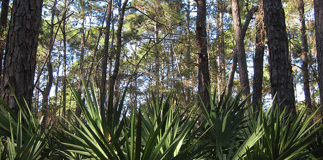 Audubon Newhall Preserve off Palmetto Bay Road on Hilton Head Island