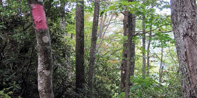 Forests in the Mountain Bridge Wilderness Area