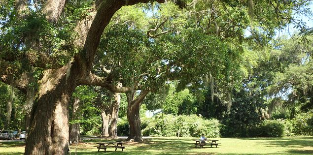 Visit historic sites in South Carolina.