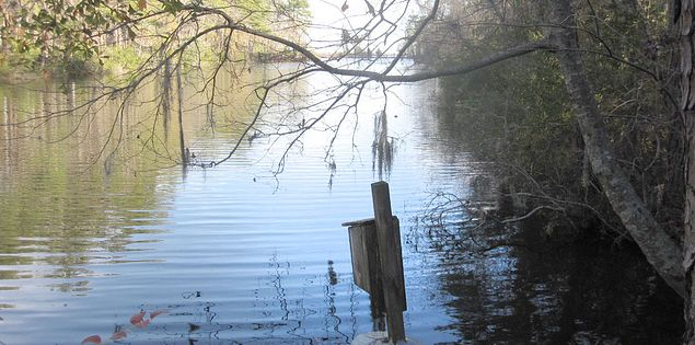 Nature trail in South Carolina's Santee State Park