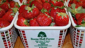Boone Hall Farms