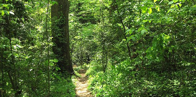 Hardwood Forest in Cleveland Park in Greenville