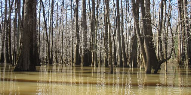 waterway Congaree and Wateree rivers