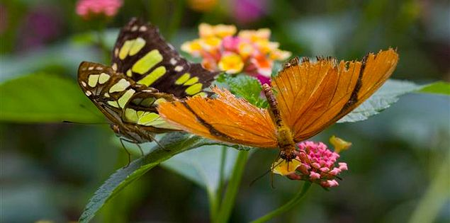 Butterfly in South Carolina's Brookgreen Garden