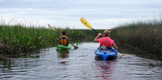 Kayaking through the South Carolina Lowcountry's ACE Basic